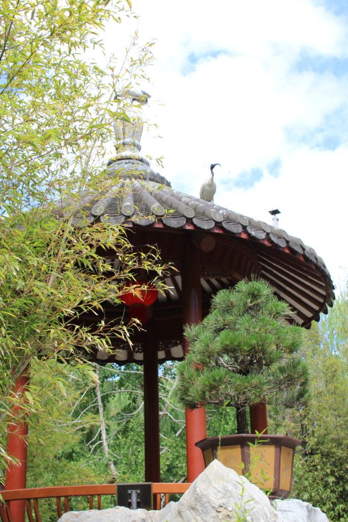 Vogel auf dem Haus im Garden of Friendship in Sydney