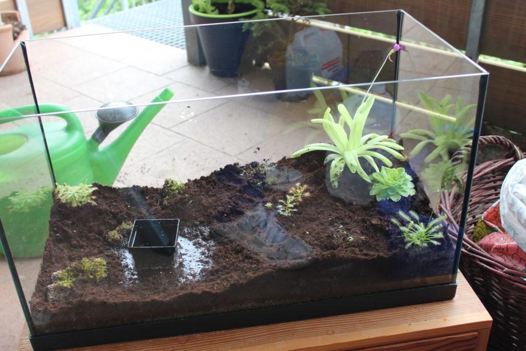 Fertig bepflanztes Terrarium
