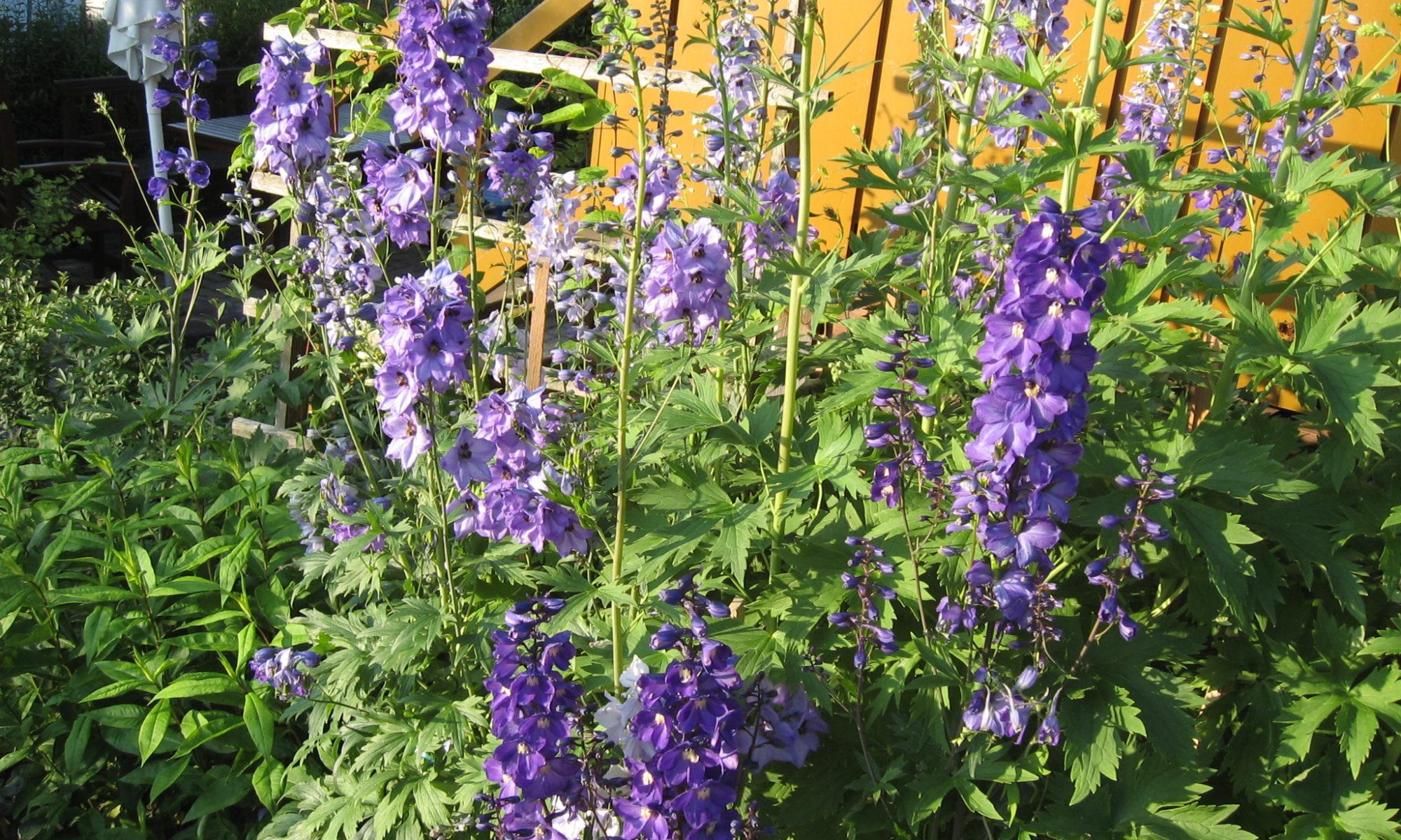 Mama´s Garten 2007