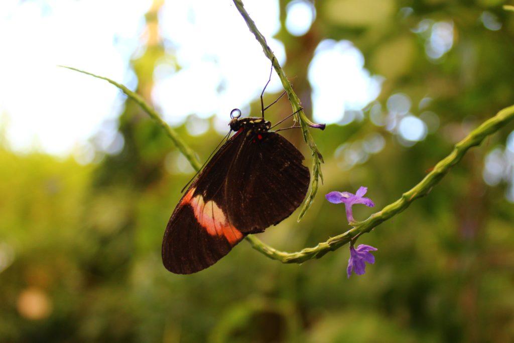 Schmetterlingshaus Icod de los Vinos